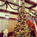 Beautiful Tree in Hotel Lobby