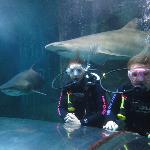 Manly Sea Life Sanctuary - Shark Dive Xtreme