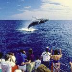 Humpback Whale in Hawaii