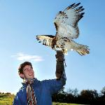 Cheshire Falconry