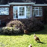 The Paddocks Bed and Breakfast - near Shaftesbury Dorset