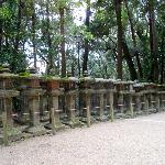 Nara Afternoon - Stone Lanterns of Kasuga Grand Shrine