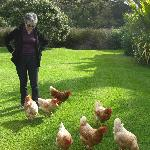  Chicken whispering ...