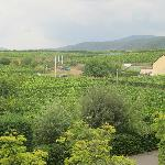 View of beautiful vineyards