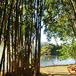 Bamboo and lake