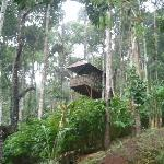  tree house cost INR2000..great place to stay
