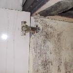 Extensive mould in kitchen cupboard