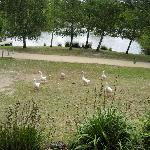 Theres even a couple of friendly geese that hang around the lake house looking for some bread