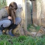 Talking to the Meerkats