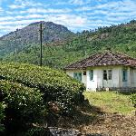 Emerald Tea Estate