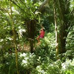 zip lining thru the trees in the jungle.