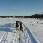 Kenai National Wildlife Refuge mushing trails in Soldotna, Alaska