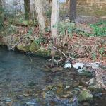 Trout stream running next to property