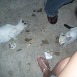  cats around the hostel