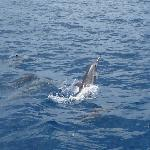 La Pirogue - Swim with the Dolphins