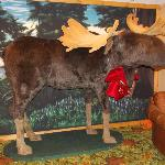  The festive Moose