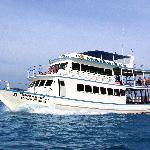 Dive Asia - Day Trips and PADI Courses
