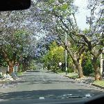 beautiful tree lined streets in this neighbourhood