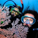 Abc Queensland Adventures - Scuba Diving