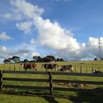 Pakinui Farmstay and B&B