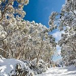 The village entrance at Mt Baw Baw during winter