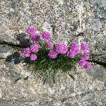  Flowers in the rocks