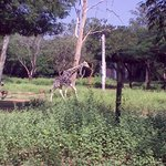 Arignar Anna Zoological Park