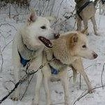 North Ridge Ranch - Dog Sledding