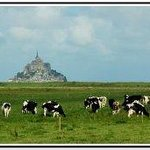 Les vaches normande de Mr LUME