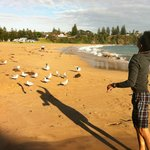  Feeding the seagulls our unused bait