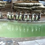  Penguins at the Zoo!