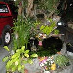 fish pond outside
