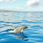dolphins swimming with the boat