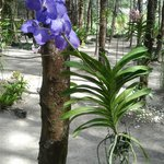 Many flowers bloom in the garden at Hapla Beach