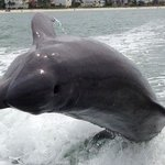 ‪Estero Bay Express Dolphin & Sunset Boat Tours‬