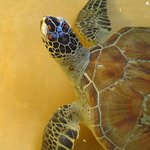 Watamu Turtle Watch