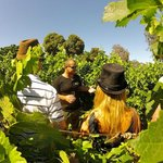 Wine Flies Wine Tours - Day Tours