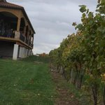The vineyard behind Ventosa