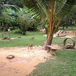Lanta Monkey School