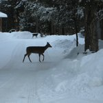  Deer Outside the Lodge