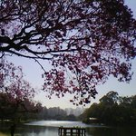 Parque do Ibirapuera