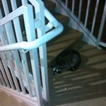 racoon that was getting fed by patron at the very end of the hallway to the left of 333