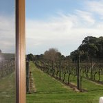 View of vines from inside the Chapel