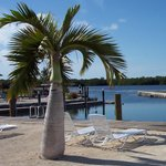 Grassy Key RV Park & Resortの写真