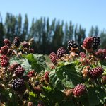 Graysmarsh Berry Farm