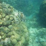 coral reefs out in front of villa