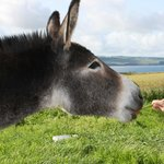  the friendly donkey