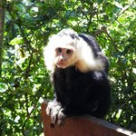 Jungla de Panama Wildlife Refuge
