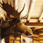  Moose head in dining room