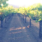  wine country in Calistoga near hotel